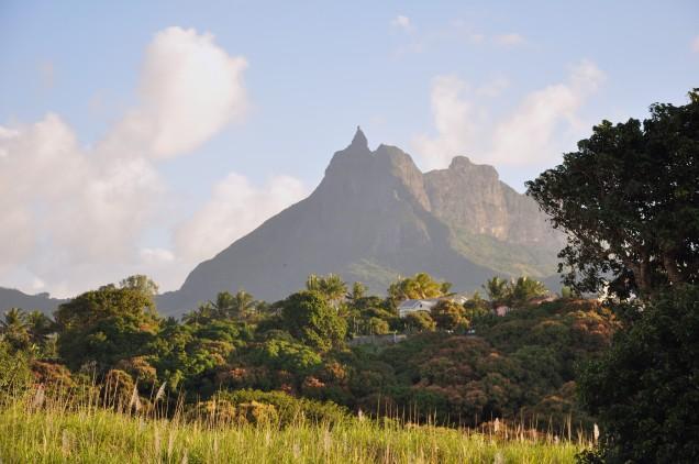 Sugar Cane Near Long Mountain